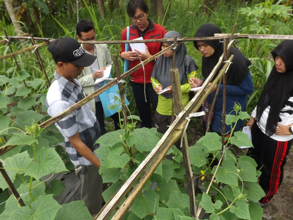 Group Indonesia  Bahagia –Topic local exposure is joint horticulture farmer