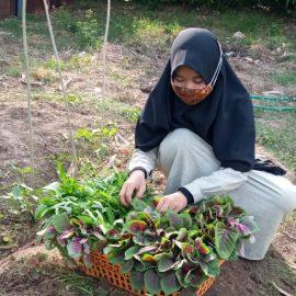 RR Makassar: Harvesting Veggies at Assyifa Orphanage