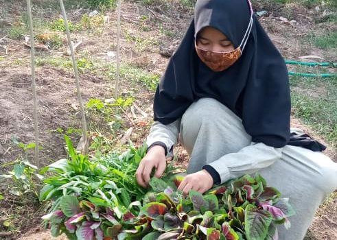 RR Makassar: Harvesting Veggies at Assyifa Orphanage